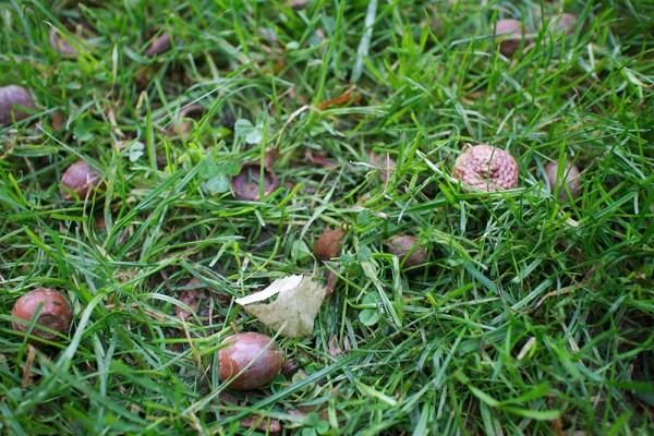 09 acorns