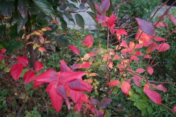 10 foliage