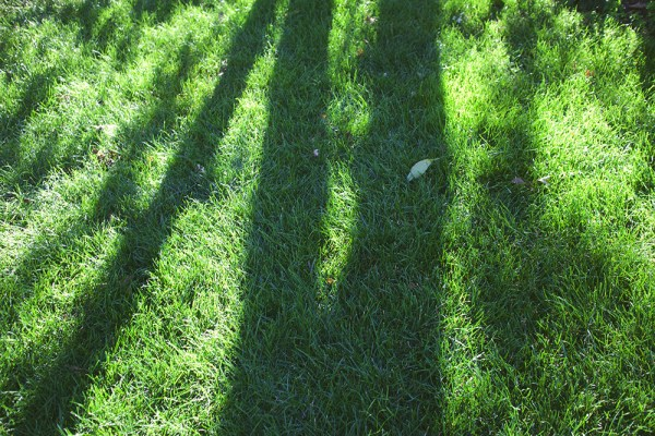 01 grass shadows