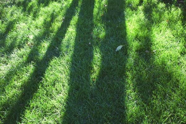 01 grass shadows