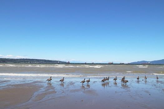 03 BD geese
