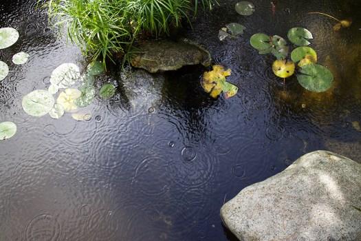 08-pond