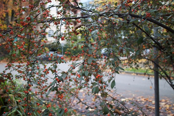 09-red-berries