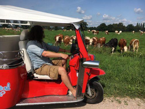 ROde Tuk met koeien 3
