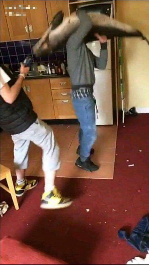 Men Dance With Dead Dolphin And Throw Corpse From Window In Vile Snapchat dolphin2