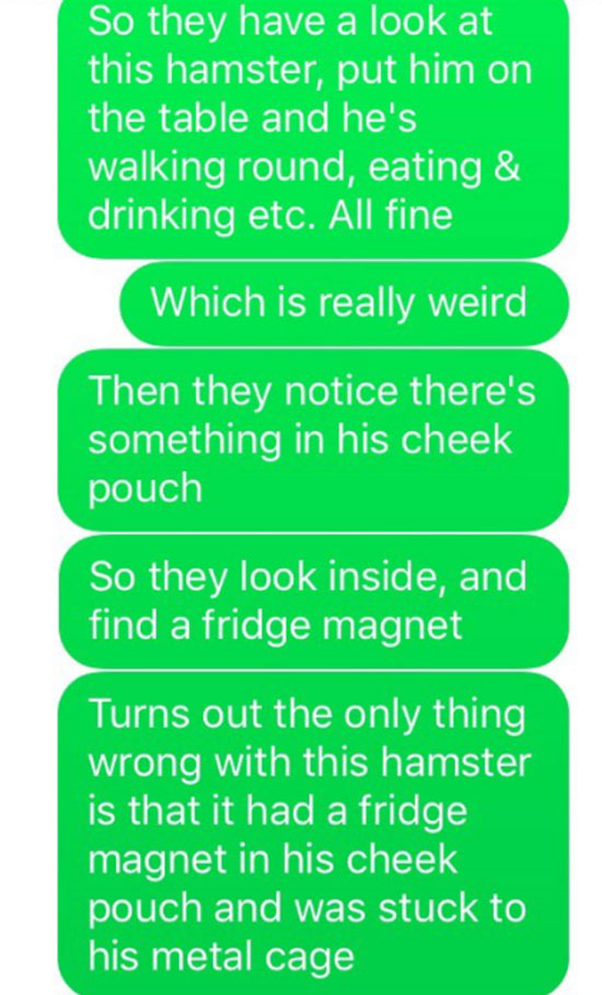 Girls Hamster Hadnt Moved For Days, Reason Why Is Incredible hamster 2