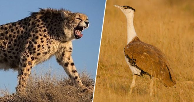 Three Animal Species Have Gone Extinct In India