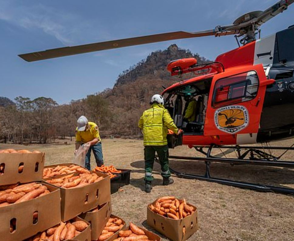 Planes Drop Thousands Of Kilograms Of Carrots And Potatoes For Starving Animals