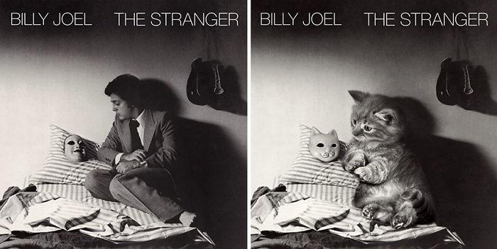 Albüm Kapaklarında Ünlüler Yerine Kediler Olsaydı