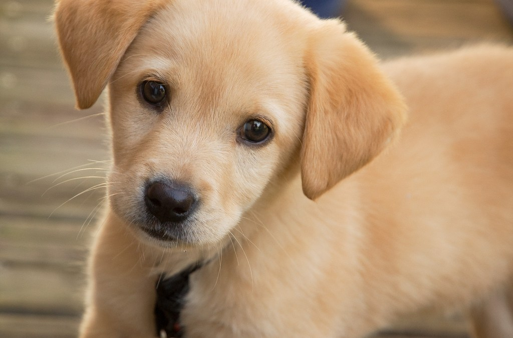 Prendere un cane: cucciolo o adulto?