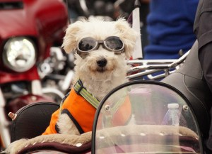 dog-on-bike