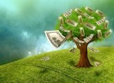 money growing on a tress