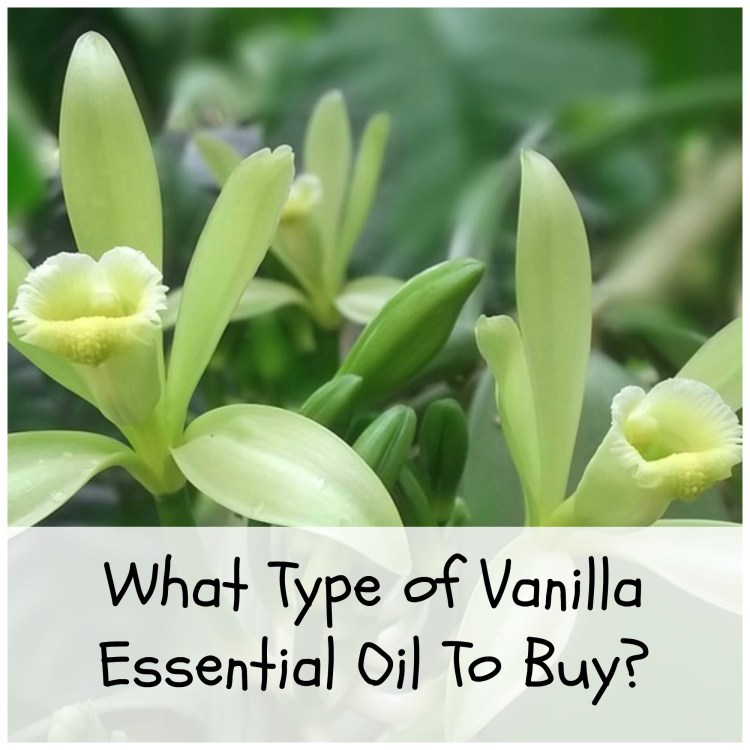 Where to buy vanilla essential oil