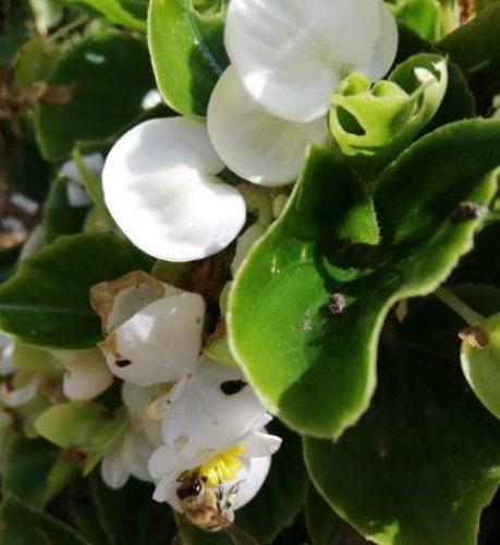 Remedii, tratamente, rețete naturiste
