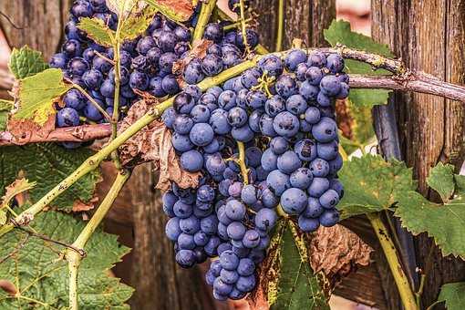 grapes 4448081 340 Sugestii pentru un organism sănătos și imunizat (Royale Cocktail)