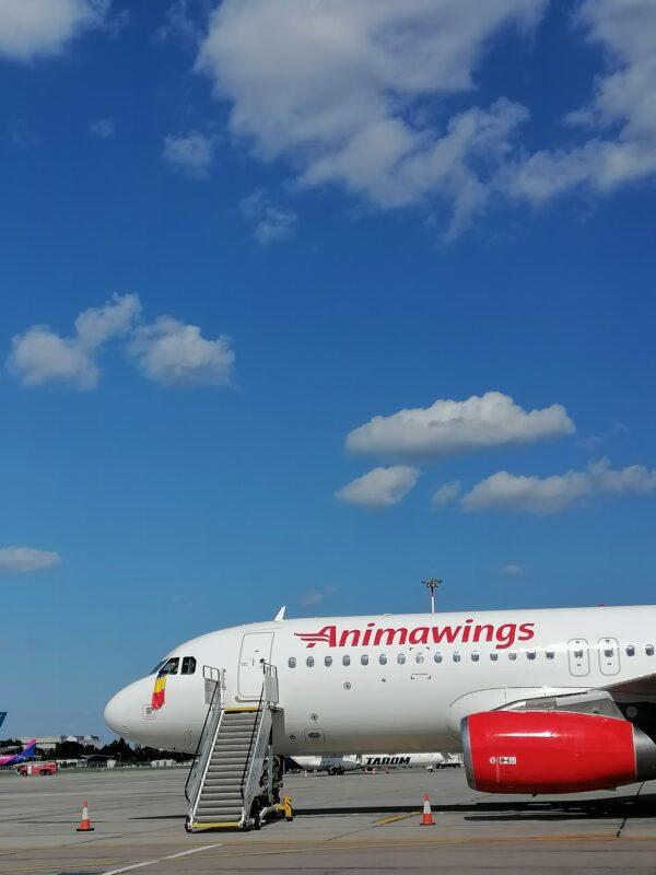 Animawings aeronava