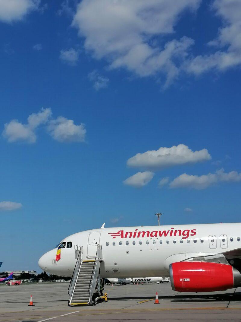 Animawings compania care își respectă promisiunile