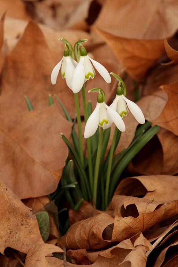 Gânduri despre primăvară și simbolul ei, mărțișorul