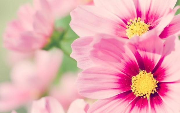 Kartu Undangan Bunga Bunga