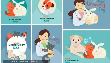 World Veterinary Day 2020 Theme | Learn Its Signficance & Other Details For This Year