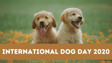 Happy International Dog Day 2020: HD Images, Wishes, Quotes, Wallpaper, Messages