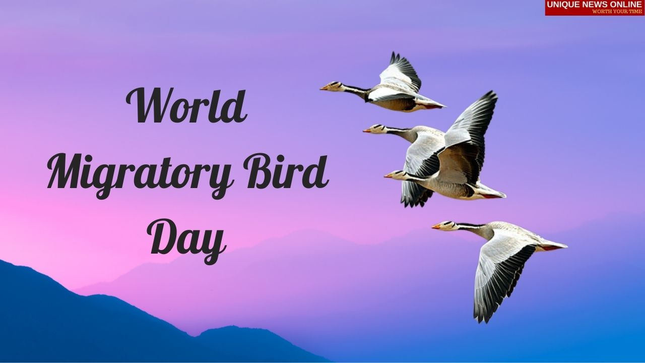 World Migratory Bird Day 2021 Poster, Quotes, Messages, and Images to share