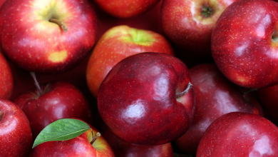 National Apple Day 2021: When is Apple Day in the USA, and Canada? It's History, Significance, Activities, Ideas and More