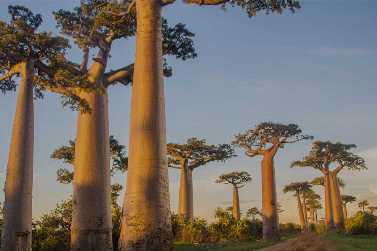 Unique Trees Outdoor Luxury