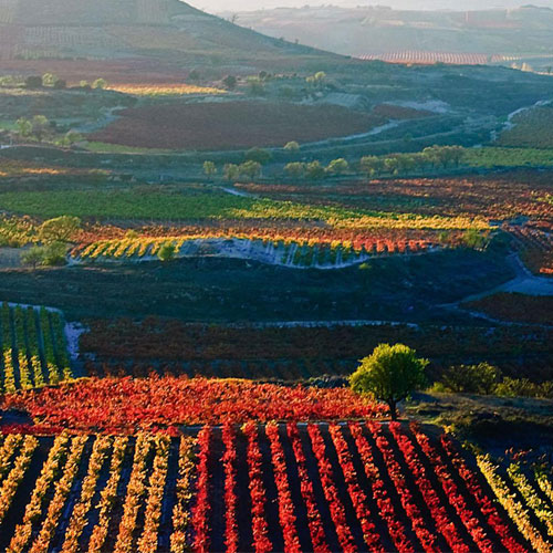 Rioja Wine Tour