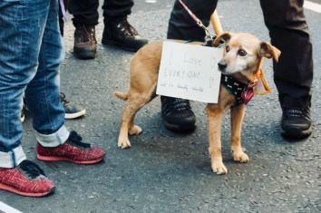 Photograph of small dog with handwritten sign on its side reading: I LOVE EVERYONE and I'm literally colourblind.