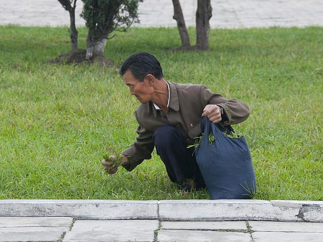 """""""Este tipo de imagen está muy extendida en occidente. Los pies de página normalmente explican que la gente come hierba de los parques. Los guías se enfadan mucho al fotografiarlas"""" Eric Lafforgue."""