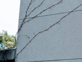 IMG_4161_exterior-wall_2500