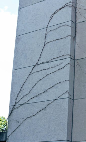 IMG_4163_exterior-wall_1900