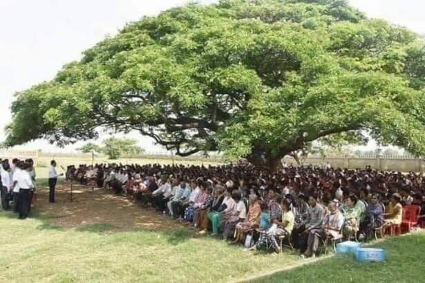 Grow trees and save nature
