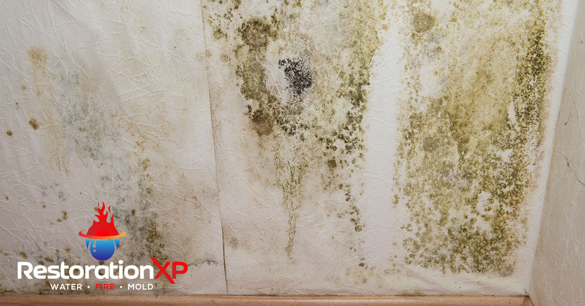 Certified mold inspection in Plano, TX