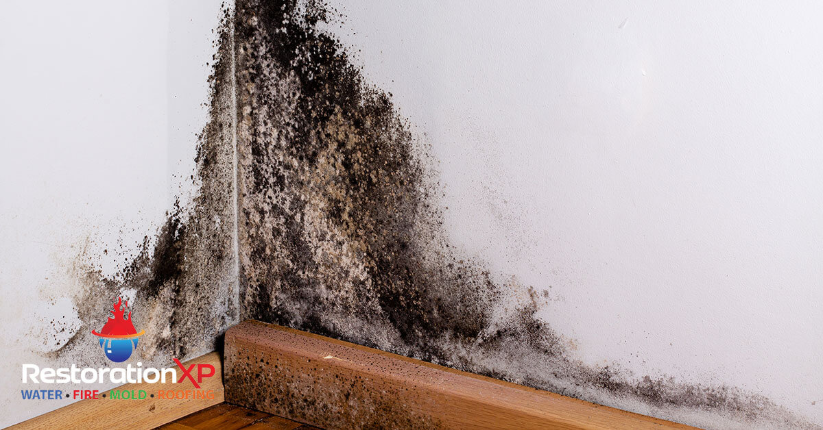 Certified mold abatement in Anna, TX
