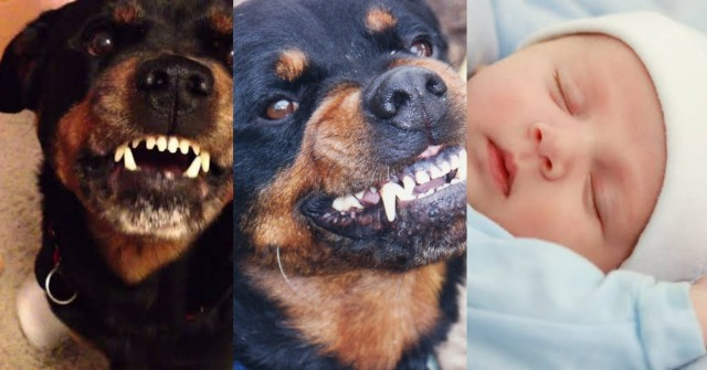 PicsArt_10-28-03.08.16 Family Rottweiler dog fatally mauls 1-day-old baby boy