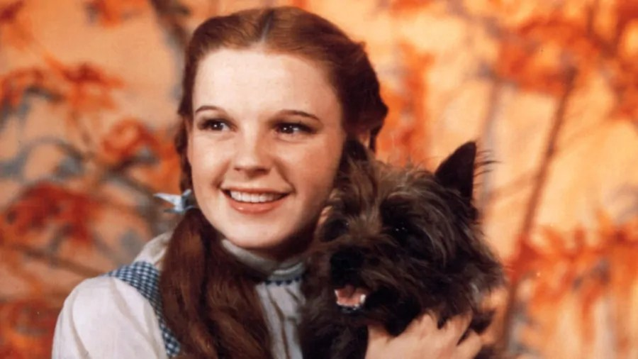 Renee Zellweger sarà Judy Garland nel biopic Judy