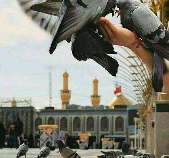 Imam Ali (PBUH) replied to the Birds Greeting