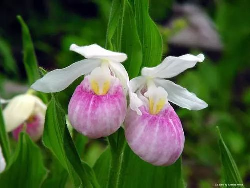 ما هي اسماء الزهور النادرة في العالم ؟