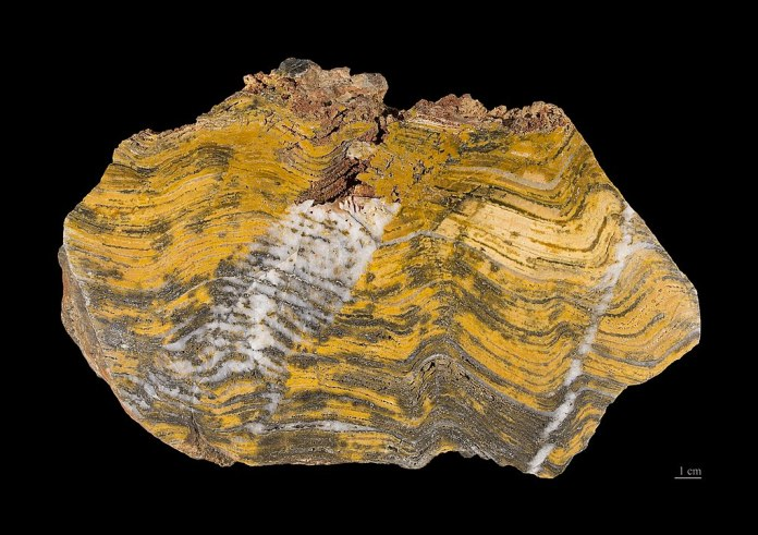 A stromatolite from the Pilbara Craton in Australia, a section of Earth's lithosphere that dates from the Archaean, between 3.6–2.7 billion years ago. Image Credit: By Didier Descouens - Own work, CC BY-SA 4.0, https://commons.wikimedia.org/w/index.php?curid=15944367