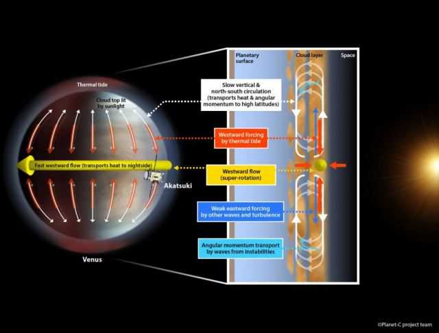 The proposed system that maintains the super-rotation (yellow) of Venus' atmosphere. The thermal tide (red) towards the equatorial top enforces the westward super-rotation. The atmosphere is controlled by a dual circulation system: the meridional (vertical) circulation (white) that slowly transports heat towards the poles and the super-rotation that rapidly transports heat towards the planet's nightside. Credit: Planet-C project team