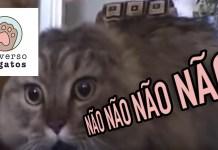 Gato falante NO NO NO NO Cat