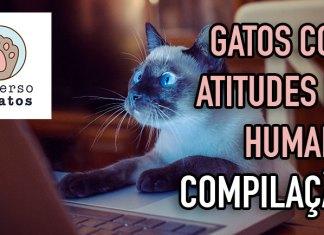 Gatos com atitudes de humano [COMPILAÇÃO]