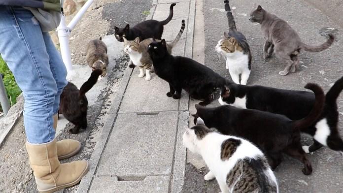 paraiso-dos-gatos-japao-16