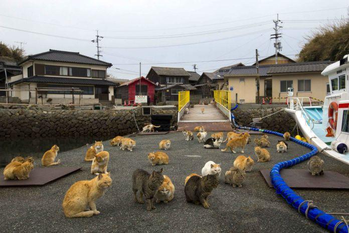 paraiso-dos-gatos-japao-3