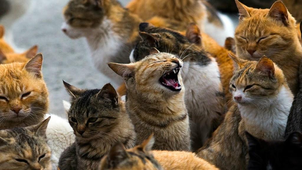 paraiso-dos-gatos-japao-6