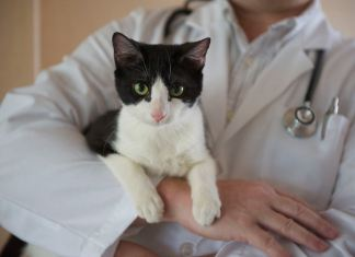 Insuficiência Renal Crónica em gatos