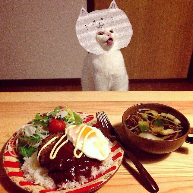 casal-fotogra-fa-gatos-ver-a-comer-naomiuno-13