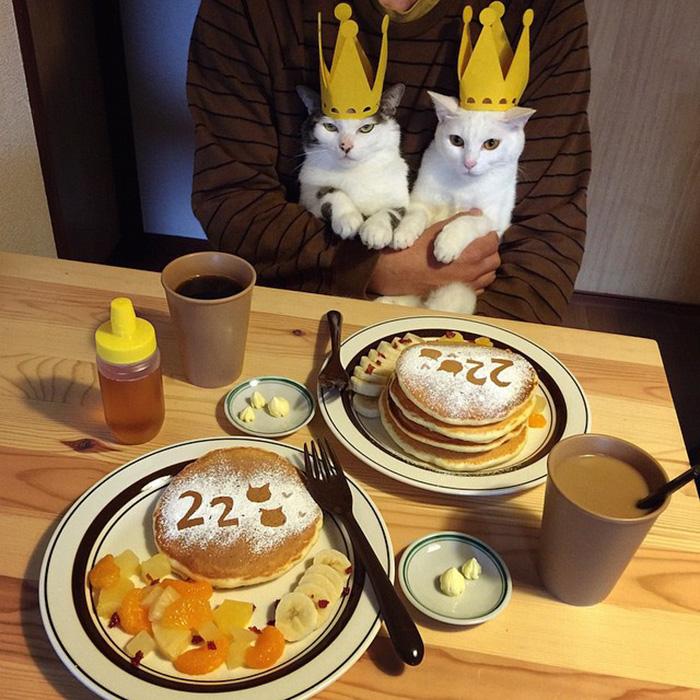 casal-fotogra-fa-gatos-ver-a-comer-naomiuno-14